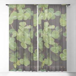Redwood Sorrel - Nature Photography Sheer Curtain