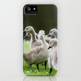 Group of Baby Canada Geese iPhone Case
