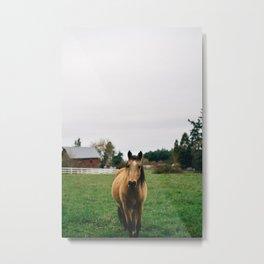 Horse // Oregon Metal Print