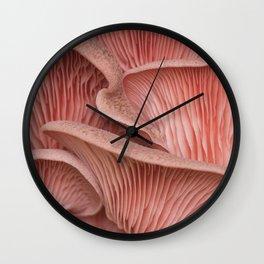 Pink oyster mushroom pleurotus Wall Clock