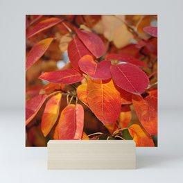 Autumn Glory - Juneberry leaves, Amelanchier Mini Art Print