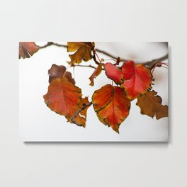 Autumn On A Branch Metal Print