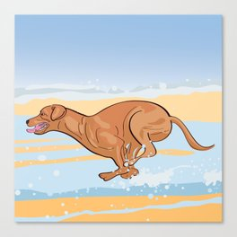 Beach Vizsla Canvas Print