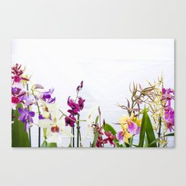 Different orchid plants on white background Canvas Print