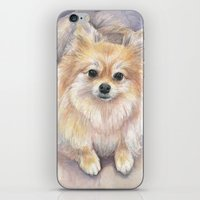 pomeranian iPhone & iPod Skins featuring Pomeranian Watercolor Pom Painting by Olechka