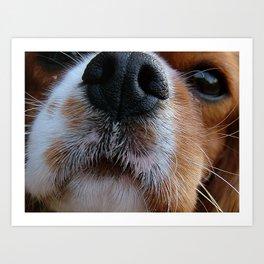 Nosey Dog Art Print
