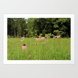 Purple Coneflowers of the Pennyroyal Plains Art Print