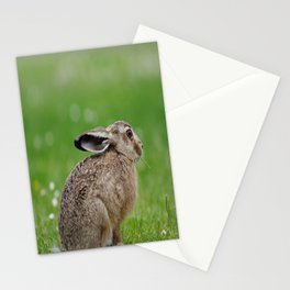 Little rabbit on a meadow Stationery Cards