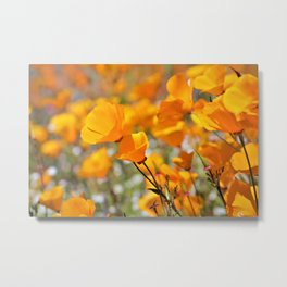 California Gold Poppies by Reay of Light Photography Metal Print