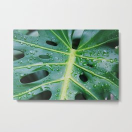 Sweaty leaf Metal Print