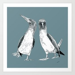 Blue-footed Boobies Art Print