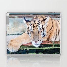 Tiger Sleeping Laptop & iPad Skin