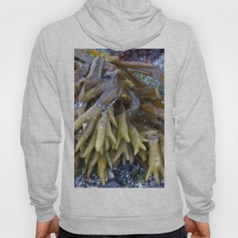 Seaweed bladders -  Bladder wrack  Hoody
