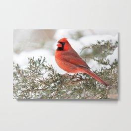 Regal Cardinal Metal Print
