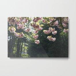 English Spring Cherry Blossom Photograph Metal Print