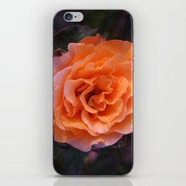 Holland Park Rose iPhone Skin