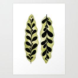 Tropical Calathea Leaf Painting Art Print