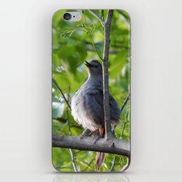 A puffy catbird iPhone Skin
