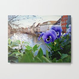 Alsace blue flowers Metal Print