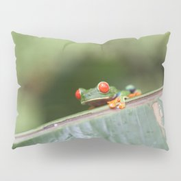 Red eye Frog on leaf Costa Rica Photography Pillow Sham