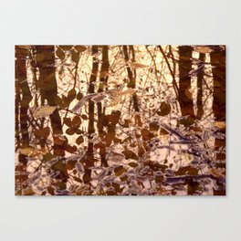 swamp II Canvas Print
