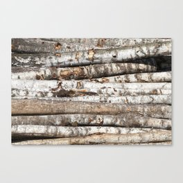 striped birch trunks Canvas Print