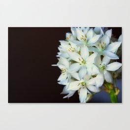 FLOWER! ;) Canvas Print