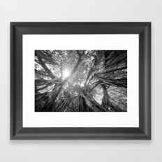 Banyan Tree Framed Art Print