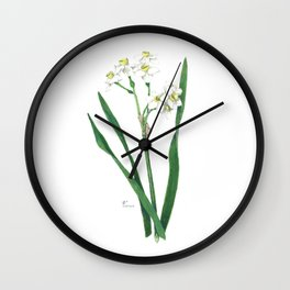 Cluster Daffodils Botanical Illustration Wall Clock
