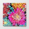 Chrysanthemums by azima