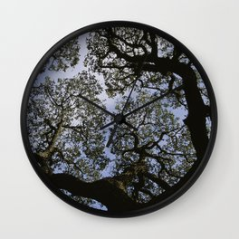 Oak Tree Reaching For The Sky Wall Clock