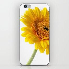 Yellow Gerbera iPhone Skin