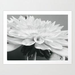 Dahlia Delicacy in Black and White Art Print