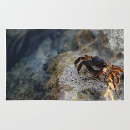 Israeli crab at the beach Rug