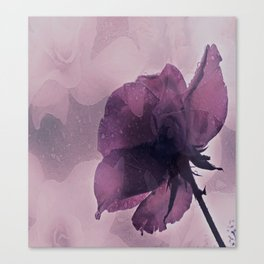 purple rose after the rain Canvas Print