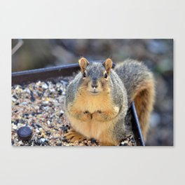 Messy Eater Canvas Print