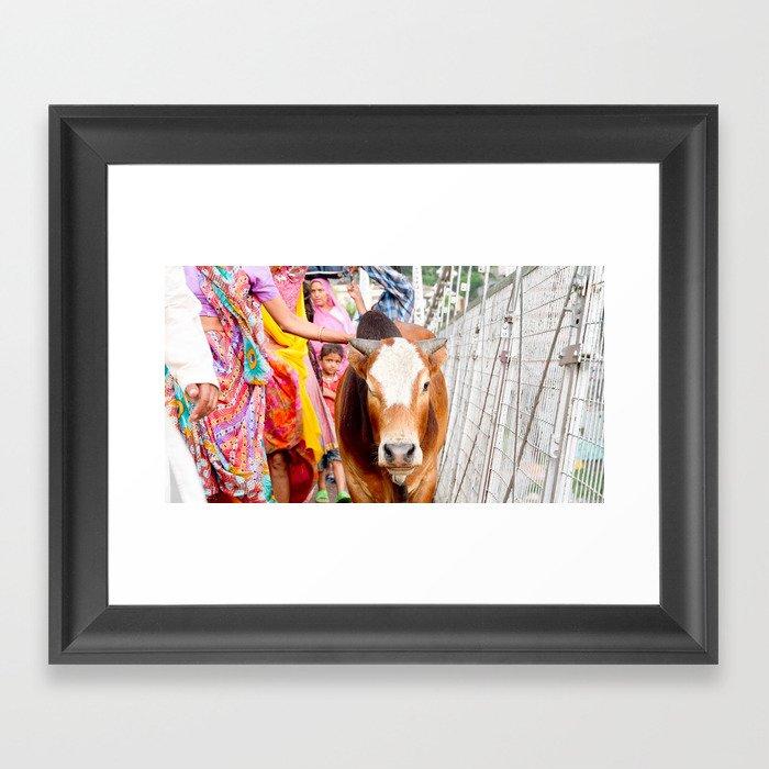 Holy cow, India Framed Art Print