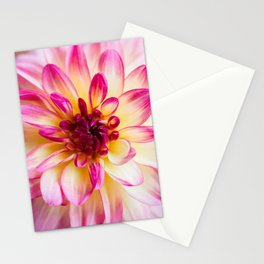 Middle of Summer Stationery Cards