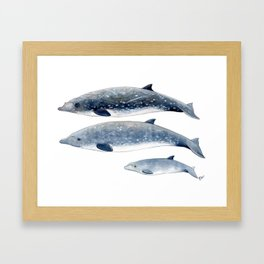 Blainville´s beaked whale Framed Art Print
