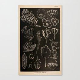 Wasp Architecture Canvas Print