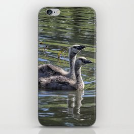 Two Goslings Taking a Swim, No. 2 iPhone Skin