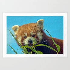 RED PANDA LOVE Art Print