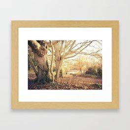 Hampstead Heath Wanderings Framed Art Print