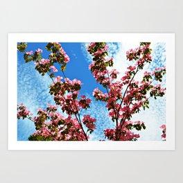 Sky/Flowers Art Print