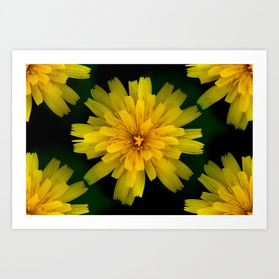 Yellow Natural Flowers On Black Background Art Print