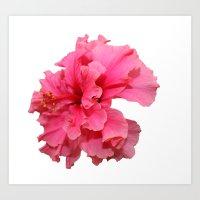 Double Hibiscus Art Print