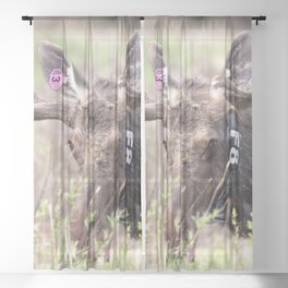 Watercolor Moose Bull 13, Rocky Mountain National Park, Willow Warrior Sheer Curtain