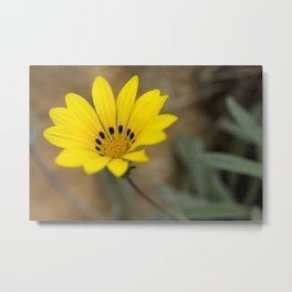Yellow African Daisy Flower - Original Botanical Nature Photography - Flora Art  Metal Print