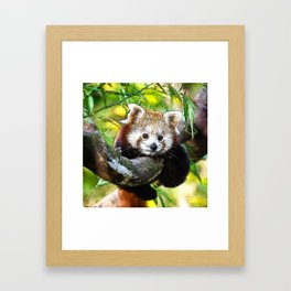 CArt red Panda Baby Framed Art Print