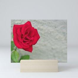 Rose on Stone Mini Art Print